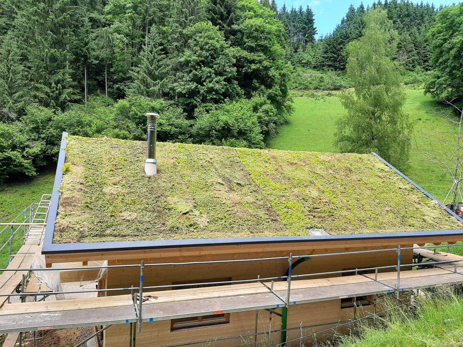 Gras Dach Bienenweide