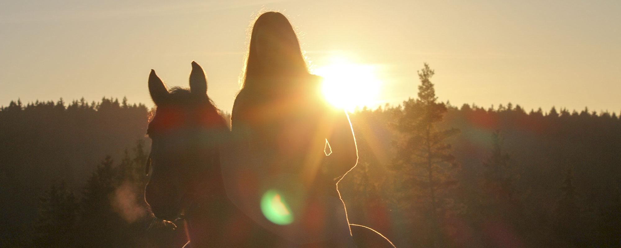Sonnenuntergang-mit-Pferd