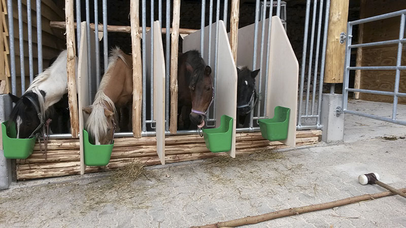 Pferde im Fressständer