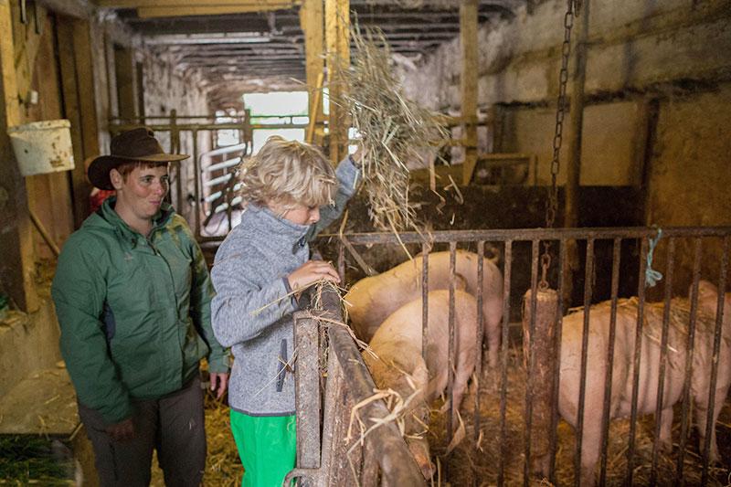 Strohdusche für die Schweine